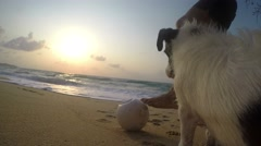 Man Playing with Dog at Beach with Ball at Sunrise at Sea. 4K Stock Footage