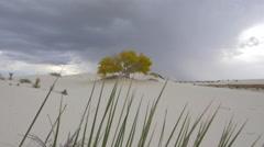 Thunderstorm lightning striking behind solitary tree in sandy desert - stock footage