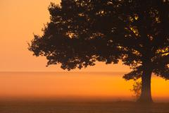 Memorable lonely tree in the morning mist - stock photo