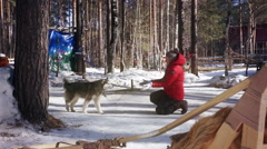 Young woman in a red jacket petting huski dog Stock Footage