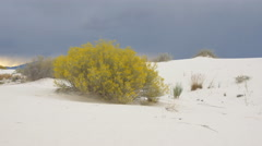 Beautiful autumn bush with yellow leaves in White Sands desert Stock Footage