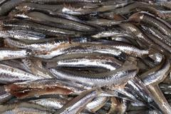 Anchovies, close up Stock Photos