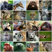 Collage with different animal faces Stock Photos