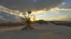 Sunset sun shining through soaptree leaves in white sand desert Stock Footage