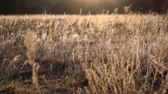 Meadow at the morning scene with change of focus. Stock Footage