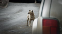 Stray dog on the road Stock Footage