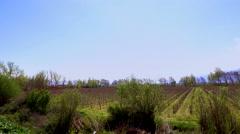 Spring Vineyard in Bekaa, Lebanon - stock footage