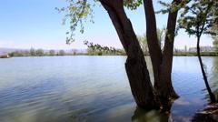 Tree at the lake side in Bekaa, Lebanon Stock Footage