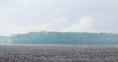 Field in winter with snow falling at mid day with natural forest on horizon - stock footage