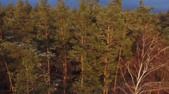Aerial view of rural road in pine wood at sunset Stock Footage