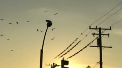 Silhouetted birds in electrical wire Stock Footage