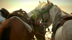 Horses together during sunset time. Horses resting Stock Footage