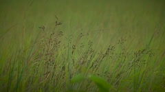 Meadows grass in outdoor grass. Outdoors Stock Footage