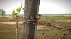 Agriculture barb wire fence. A barbed wire fence and old wooden post line Stock Footage