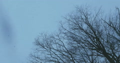 Wide shot under tree branches with mild snow looking up Stock Footage