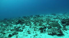 Anchor chain and anchor in sand, underwater, anchor damage, HD, UP31027 Stock Footage