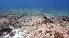 Ocean scenery mostly dead and barren reef, some small coral recruits and algae, Stock Footage