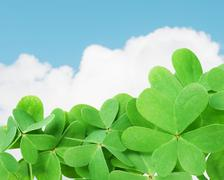 Stock Photo of green clover