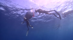 Freedivers freediving on deep coral reef in Australia, HD, UP31043 Stock Footage