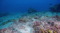 Ocean scenery lots of dead coral rock with sand and sponges, on dead reef, HD, Stock Footage
