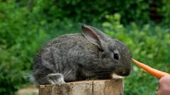 Rabbit. Feeding animal Stock Footage