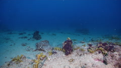 Ocean scenery barren patches of sand and dead reef with sponges and remnant Stock Footage