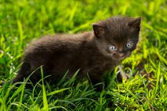 Stock Photo of Little tabby kittens  on green grass