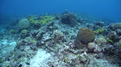 Ocean scenery half dead reef with soft corals, on coral reef, HD, UP31115 Stock Footage