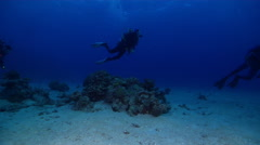 Female model scuba diver swimming on stressed coral reef in Kingdom of Tonga, Stock Footage