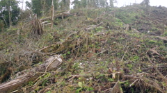 Strip cut through rainforest in the Amazonian foothills of the Andes - stock footage