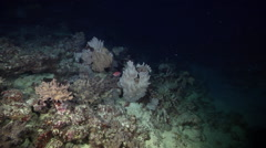 Ocean scenery inner lagoon reef, soft corals, on stressed coral reef, at dusk, - stock footage
