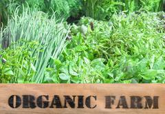 Fresh organic produce in wooden box - stock photo