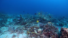 Ocean scenery lots of fish around good hiding structure, branching coral, on Stock Footage