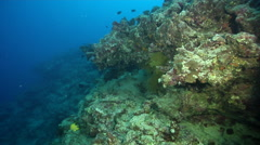 Ocean scenery moving along a wall with overhangs and a few fans, on dead reef, - stock footage