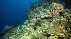 Ocean scenery lots of algae and barren rock, on dead reef, HD, UP31291 Stock Footage