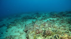 Ocean scenery sponges, lots of sand and rubble and dead coral, on dead reef, HD, Stock Footage