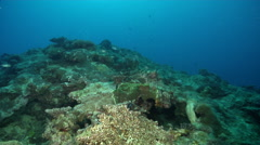 Ocean scenery some good encrusting hard corals but no much habitat for fish, on Stock Footage