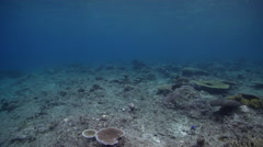 Ocean scenery some nice hard coral colonies starting to recolonise the reef, on - stock footage
