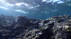 Ocean scenery healthy and diverse hard corals, on very shallow reef and surface, Stock Footage