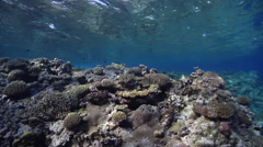 Ocean scenery surge, healthy and diverse hard corals, on very shallow reef and Stock Footage