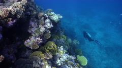 Distant scuba diver swimming on shallow wall in Kingdom of Tonga, HD, UP31346 Stock Footage