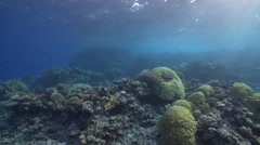 Ocean scenery pans across sun and shallow reef, on very shallow reef and Stock Footage
