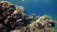 Ocean scenery affected by surge, covers nice hard coral structures, on very Stock Footage