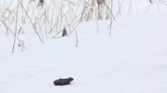 Erroneous premature awakening 4. Frog woke up in early spring, however snow fell Stock Footage
