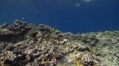Ocean scenery on very shallow reef and surface, HD, UP31353 Stock Footage