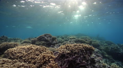 Ocean scenery surge, on very shallow reef and surface, HD, UP31355 Stock Footage