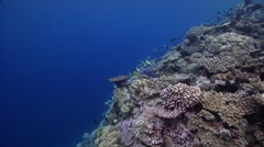 Ocean scenery spawning aggregation, surge, on very shallow reef and surface, HD, Stock Footage