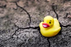 Yellow rubber duck on dry land - stock photo