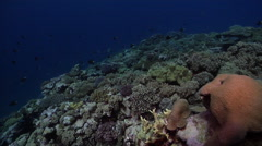 Ocean scenery on shallow coral reef, HD, UP31390 Stock Footage