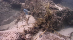 Tangle of fishing line and grass, underwater, marine pollution, HD, UP31508 - stock footage